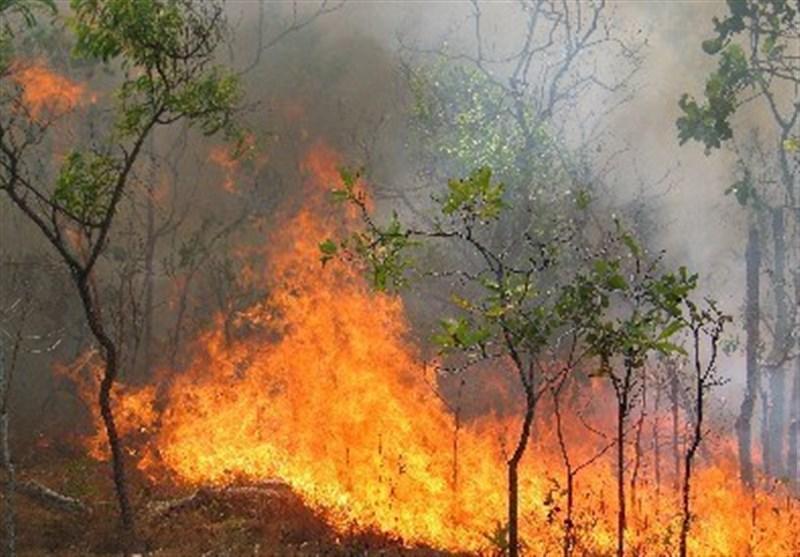 عامل 6 آتش سوزی اخیر در جنگل های کشور اعلام شد