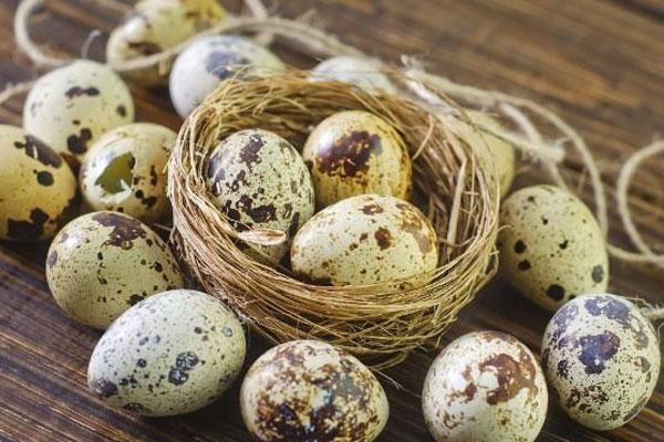 خواصی از سلامت تا زیبایی با تخم بلدرچین