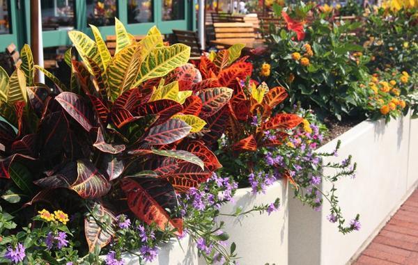 14 گیاه آپارتمانی رنگارنگ که جذابیت خانه را دوچندان می نمایند